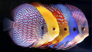 рыба, аквариум