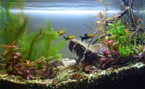 biotope-aquarium-c2013_66-1