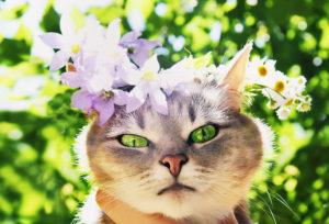 волнения весны