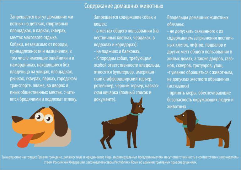 Закон о выгуливании собак в россии поворотный пункт