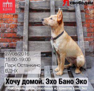 бездомная_собака
