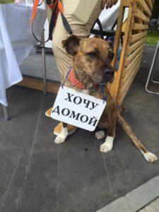 бездомная_собака2