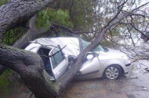 дерево, авто