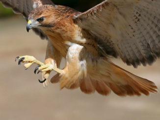 птица, экология, орнитарий