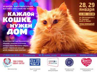 кошки_ищут_хозяев