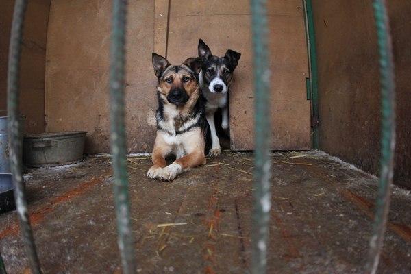 собак из приюта