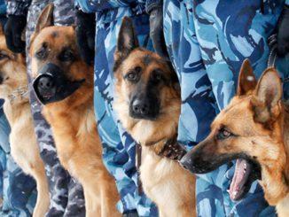 школа собаководства