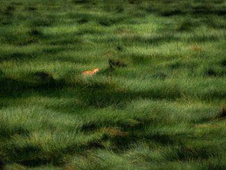 фотоконкурс золотая черепаха