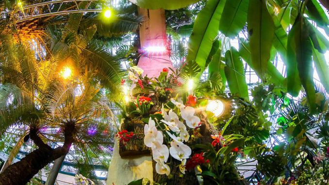 Ежегодный фестиваль орхидей
