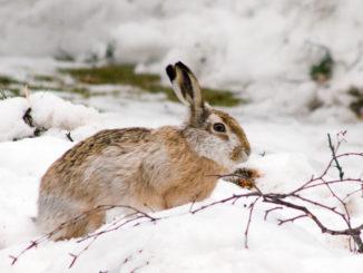 кормушки для зайцев