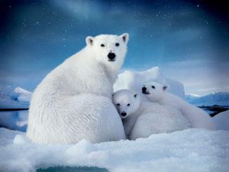 знание арктики