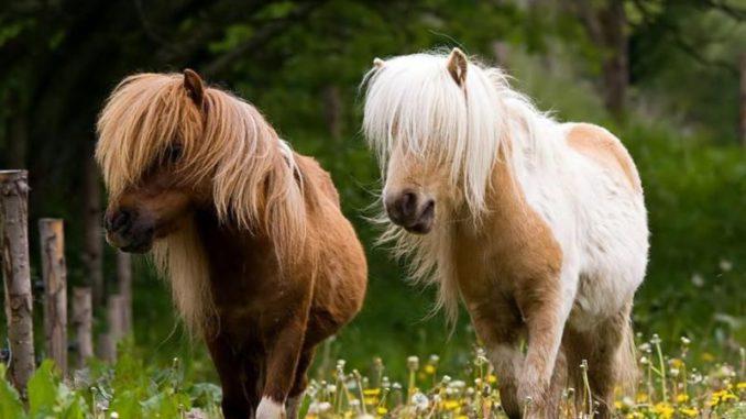 всероссийский пони-форум