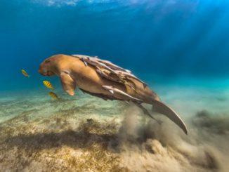 Фестиваль подводной фотографии