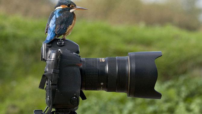 Кубок по спортивной орнитологии