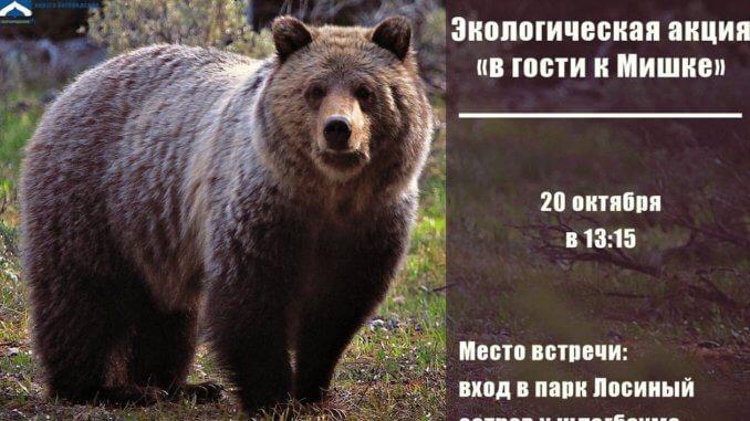 Помочь медведу Малышу