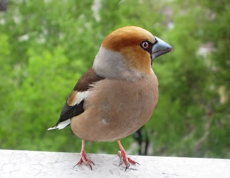 Европейский учет птиц