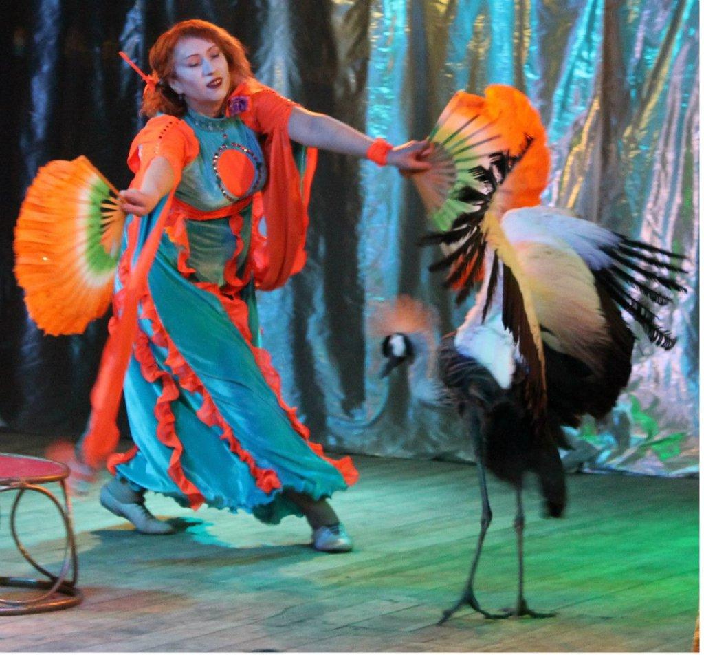 Новогоднее шоу птиц