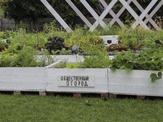 посадить овощи
