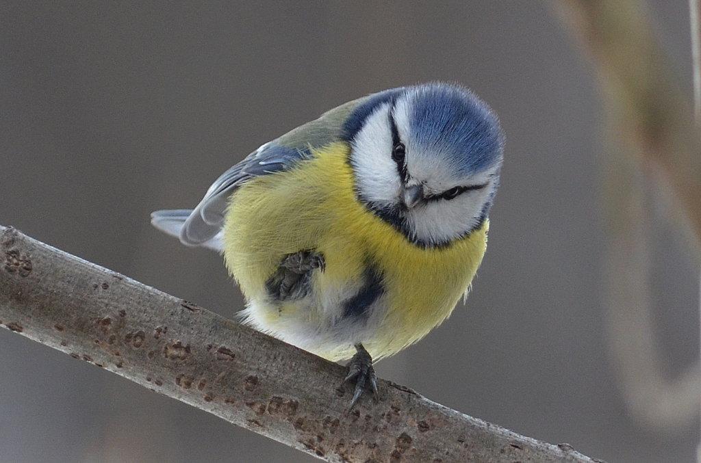 Общегородская акция «Птица-Синица»