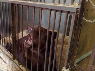медведь малыш