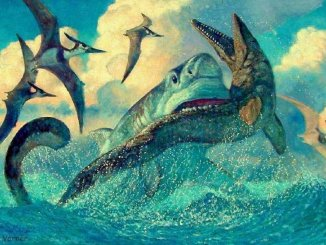 позднемеловые акулы