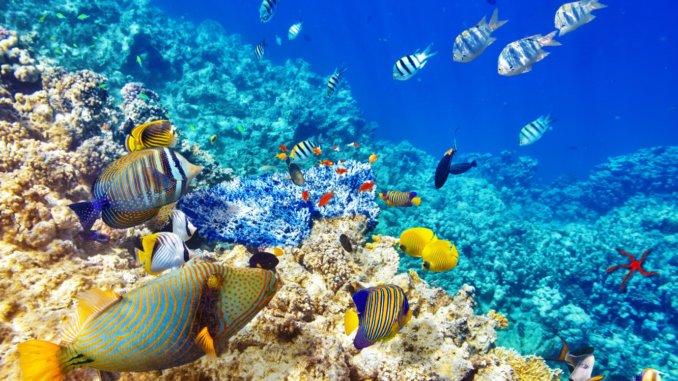 дикий подводный мир